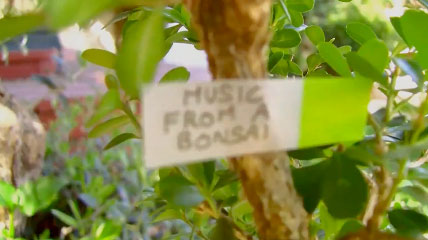 music_from_a_bonsai